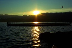 back @ Tiefenbrunnen (Desire) Tags: sunset lake bird switzerland suiza zurich zrich tiefenbrunnen zrisee