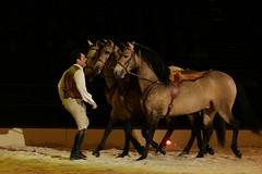 Hasta Luego & his stallions (Rozpravka) Tags: show horse fourseasons stallion dun apassionata