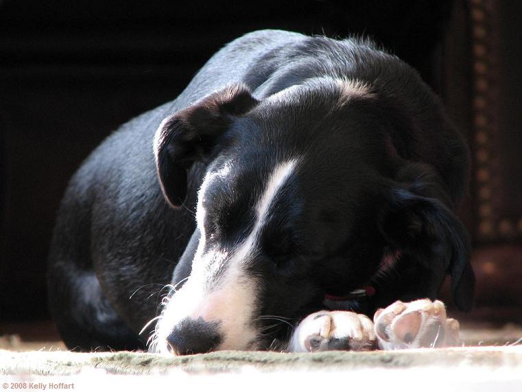 Lily Asleep