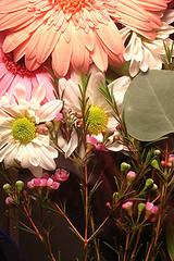 Flowers iphone wallpaper beautiful