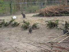 IMG_1974 [1024x768].JPG (yerseypijpelink) Tags: rhenen ouwehands dierentuin yersey