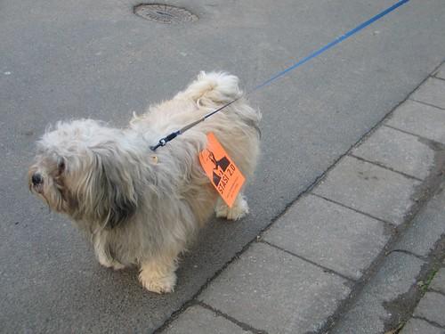 Hundsdemo gegen Schäuble
