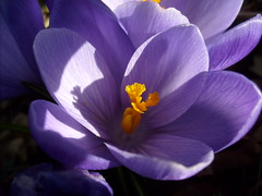 Purple flower (Nin) Tags: flowers spring