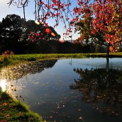 the good life. (Alex Merenkov photography) Tags: girls flower club creek golf for oak walnut taken yearbook course shooting while hurst cvhs alexmerenkov