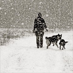 some call it fun (me*voilà) Tags: winter snow snowstorm dogwalker dogs action play