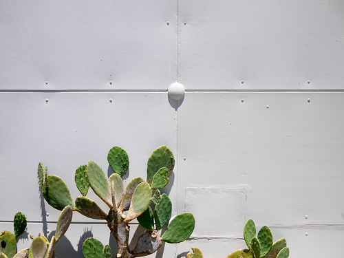 """134/365 - """"White wall and cactus"""""""