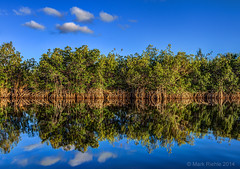 (Vision Images) Tags: blue green art canon photography big florida mark fine images vision ii everglades l 5d cypress 1740mm hdr riehle 5d2