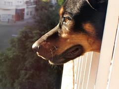 Pomelo (Agustina Lucía) Tags: light dog luz puppy eyes perro mirada balcon