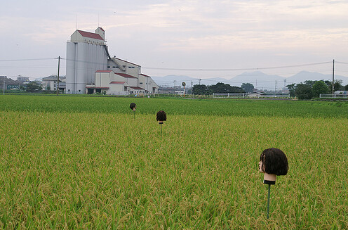 above: bodyless scarecrows guard a field in japan.