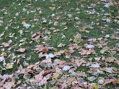 Hojas de árbol en el suelo