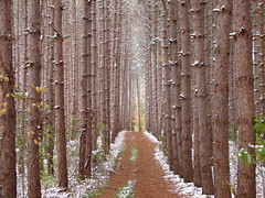 The Road Goes Ever On and On... (Alexander Yates) Tags: road trees winter usa snow newyork cold nature topv111 forest ilovenature woods trail cny syracuse writer centralnewyork novelist beaverlake baldwinsville 10faves 25faves beaverlakenaturecenter travelwriter alexanderyates