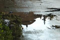 Pozzanghera (SuDolce) Tags: lago urbano pioggia pozzanghera lagourbano