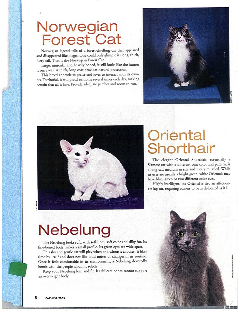 Publications- cats usa 2005 2127818887_0380bcaea6_b