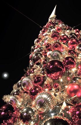 December's Cherry Tree