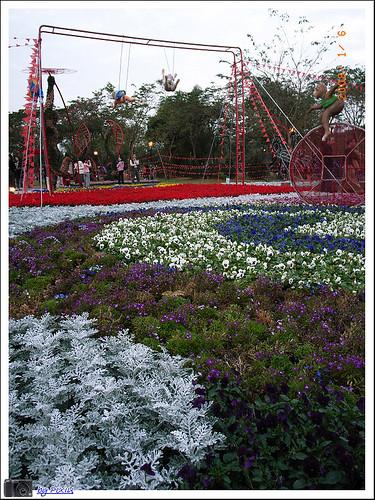 大安森林公園花展 031