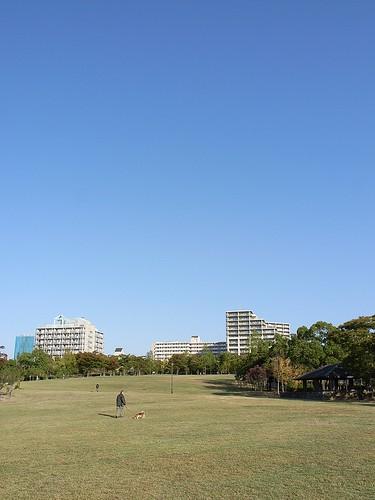 晴れた日の公園