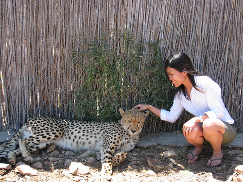 Good Cheetah ...