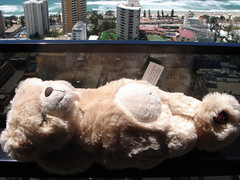 Gold Coast 108 (Air, Sunshine + H2O) Tags: sleeping beach sunshine honeymoon teddy australia queensland snoring goldcoast circleoncavill