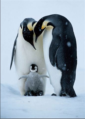 Penguin Family.jpg