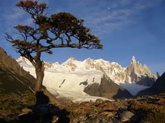 Fitz Roy - trek - aurore - arbre - sommets