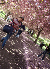 tres pink (istolethetv) Tags: pink flowers photo petals foto image snapshot picture photograph sakura gothamist bbg brooklynbotanicgarden hanami brooklynbotanicalgarden cherryblossomfestival