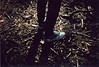 when you are near (.ultraviolett) Tags: film holga lomo analogue ho vignetting holga135bc