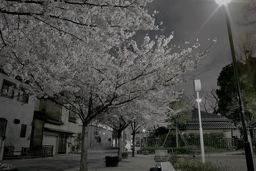 My Cherry Blossom Street