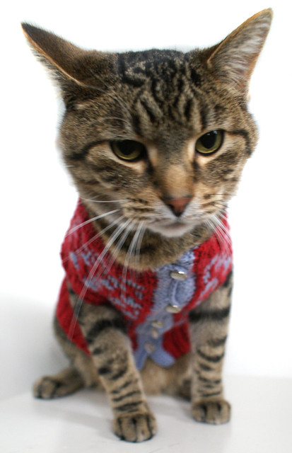 We are not amused. Sally Pet Cardigan