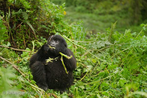 RYALE_Rwanda_Uganda_Safari-33