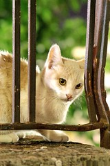 Taquicardias Nocturnas (eva cuca) Tags: verde green cat eyes eva calafell oxido ojos gato xiao verd barandilla oxidado verja abigfave tepasaste ltytr1 evacuca