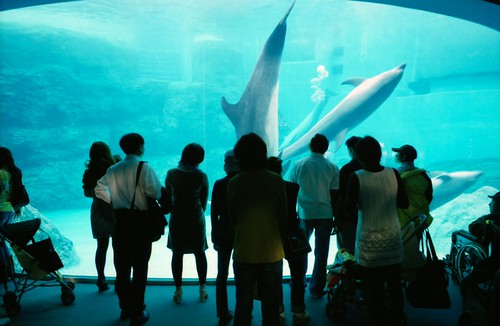 The Nagoya port aquarium (Nagoya Public Aquarium)