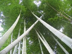 IMG_0011-bamboo