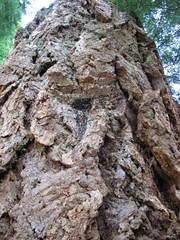 Big bark