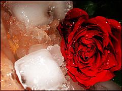 أمنيات مجنونة (๑۩ عازف ۞ حروف ۩๑) Tags: عيد شوق الحب حب وله رسائل بطاقات امنيات اشتاق لذة نشوة