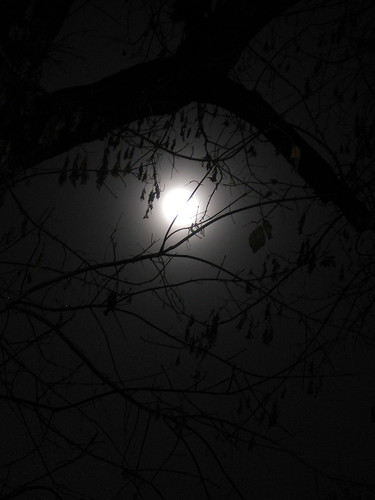 moon behind branches
