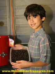 BEST_QUALITY_COFFEE (West Indian Treasures) Tags: coffee puertorico organiccoffee migratorybirds shadecoffee puertoricancoffee frenchcoffee westindiantreasures