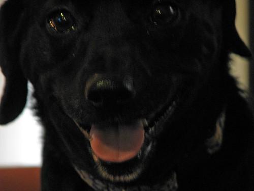 SWEETIE...THE DOG