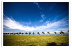 Row of Palms (Hussain Shah.) Tags: blue sky beach d50 palms nikon sigma row kuwait 1020mm shuwaikh cokin rowofpalms gnd8 mywinners aplusphoto