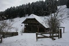 IMG_0720 (LearningTour) Tags: tractor energie hout trekker zwitserland hakken zagen warmte stoken kloven haardhout kloofmachine