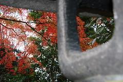 Kyoto Autumn 07 series (kurokojpn) Tags: autumn leaves japan canon eos tokyo orlando kyoto temples   shrines kuroko 40d canon40d photosjapan kurokoshiroko kuroko01 kurokoshiroko photographytokyo photostokyo bestoftokyo tokyobest orlandojpn thetokyopost kurokojpn