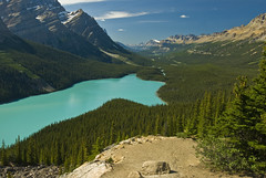 Peyto Yet Again (dbarronoss) Tags: lake breath taking peyto naturesfinest lakepeyto flickrsbest specland