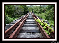 The Future (topazz2412) Tags: wood old railroad bridge trees summer vanishingpoint wooden bush hiking walk perspective australia frame future cannon newsouthwales disused parallel linear trainline northernrivers bestofaustralia cannon40d