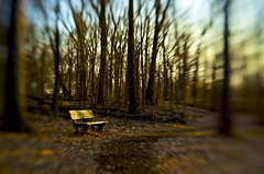 Have a seat (p2wy) Tags: trees lensbaby forest bench interestingness interesting arboretum explore trail d3 lisle mortonarboretum p2wy