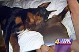 Kinship Circle - 2008-04-17 - New Orleans Cop Fires 8 Bullets Into Beloved Dog 01