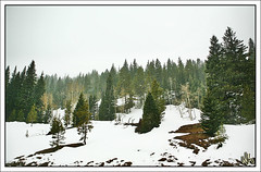 Snowy Vail (i ea sars) Tags: vail colorado denver tree trees forest snow snowstorm snowfall winter spring nature hill mountain mountains rockymountains skiing canyon i70 west usa roadtrip canon5d canoneos5d 2470mm 2470l canonef2470mmf28lusm ef2470mmf28lusm invierno zima primavera nieve snih bosque america proda naturaleza  natur landscape scenery priroda berg berge montagnes vuoret fjell gry  hora hory montaa montanas   hiver