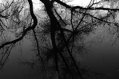 Río Eresma (Segovia) (alfonsocarlospalencia) Tags: eresma río segovia reflejos byn árboles agua infancia recuerdos hojas grises luz negro troncos siluetas ramas realidad ilusión belleza arte