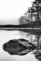 the tide reveals (Joshua R. Ives) Tags: morning trees bw seaweed detail reflection fog landscape blackwhite rocks kitterypointmaine