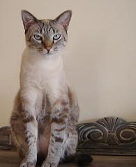 michel (sosgatinhos) Tags: pet cats love cat furry kitten feline chat kittens gatos gato felino neko shelter katz adoption adoção peludo adote abrigo animalwelfare catlover sosgatinhos