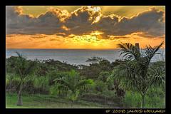 Hamakua Tangerine Sunrise (Mellard) Tags: ocean sea seascape sunrise hawaii coast palm bigisland hdr 5xp mellard