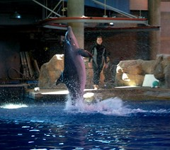 Jump! (mestes76) Tags: minnesota dolphins coolest discoverybay zoos applevalley minnesotazoo dolphinshow 091507
